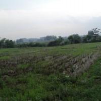 BRI Krian 1: 1 bidang tanah dengan total luas 1.615 m2 di Kabupaten Mojokerto