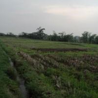 BRI Krian 2: 1 bidang tanah dengan total luas 1.550 m2 di Kabupaten Mojokerto