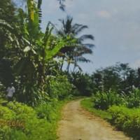Tanah seluas 5100 m2 sesuai SHM No. 00153, di Desa Apuan, Baturiti, Kabupaten Tabanan (BNI Kanwil 08)