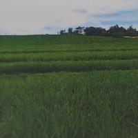 Tanah seluas 4630 m2 sesuai SHM No. 1833, di Desa Megati, Selemadeg Timur, Kabupaten Tabanan (BNI Kanwil 08)