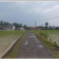 1 bidang tanah dengan total luas 11500 m2 di Kabupaten Tanggamus