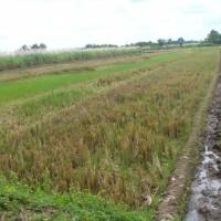 BRI Sudirman: 1 bidang tanah dengan total luas 955 m2 di Kabupaten Karanganyar