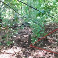 PNM PATI: Tanah non pertanian, SHM No.01034, luas tanah 410 m2, di Desa/Kel. Muryolobo, Kec. Nalumsari, Kab. Jepara