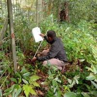 (Bank Papua Fakfak)1 bidang tanah dengan total luas 1800 m2 di Kabupaten Fakfak
