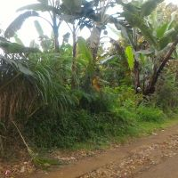 1 bidang tanah dengan total luas 7550 m<sup>2</sup> berikut bangunan di Kabupaten Buleleng