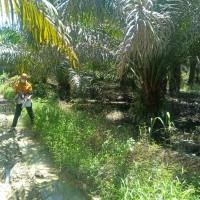 1 bidang tanah dengan total luas 17595 m2 di Kabupaten Pasangkayu