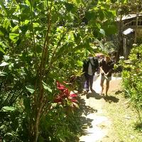 KPP PMA 5 (23-09): 1 (satu) bidang tanah SHM No. 105 luas 2500 m2 di Desa Gitgit, Kec. Sukasada, Kab. Buleleng