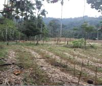 [BRI Lsk] 1b. Sebidang tanah luas 14.465m2 berikut turutannya sesuai SHM No39 di Nagari Tanjung Beringin, Kecamatan Lubuk Sikaping