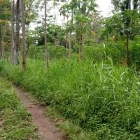 1 bidang tanah dengan total luas 1920 m<sup>2</sup> di Kabupaten Boyolali