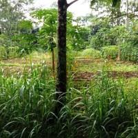 1 bidang tanah dengan total luas 1780 m<sup>2</sup> di Kabupaten Boyolali