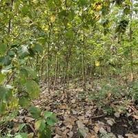 1 bidang tanah dengan total luas 510 m<sup>2</sup> di Kabupaten Boyolali