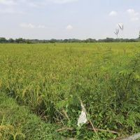 1 bidang tanah dengan total luas 1063 m<sup>2</sup> di Kabupaten Boyolali