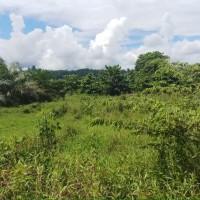 1 bidang tanah dengan total luas 1067 m2 di Kabupaten Pasangkayu