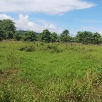 1 bidang tanah dengan total luas 1356 m2 di Kabupaten Pasangkayu