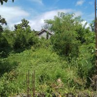 BRI Kefamenanu - 1 bidang tanah dengan total luas 335 m2 di Kabupaten Timor Tengah Utara