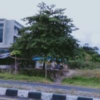 Sebidang tanah kosong dengan sisa luas 22.525 M2  sesuai SHM No.441/Paal IV di Ring Road  Kota Manado