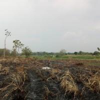 1 bidang tanah dengan total luas 6900 m<sup>2</sup> di Kabupaten Bojonegoro