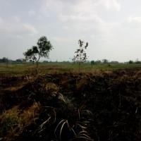 1 bidang tanah dengan total luas 560 m<sup>2</sup> di Kabupaten Bojonegoro
