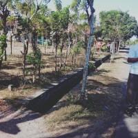 Mandiri Taspen (21-09): 1 (satu) bidang tanah SHM No. 1388 luas 1425 m2 di Desa Pengambengan, Kec. Negara, Kab. Jembrana