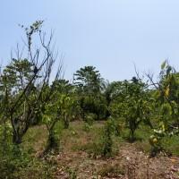 Mandiri RRCR X, Lot 3c: 1 bidang tanah dengan total luas 7063 m2 di Kabupaten Poso