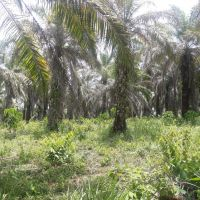 PT. BRI (Persero) Tbk Cabang Kota Pinang: 1.a. 1 bidang tanah luas 17122 m2 di Kabupaten Labuhan Batu Selatan