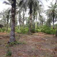 PT. BRI (Persero) Tbk Cabang Kota Pinang: 2.b. 1 bidang tanah luas 20000 m2 di Kabupaten Labuhan Batu Selatan