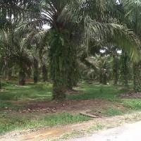 1 bidang tanah dengan total luas 29064 m<sup>2</sup> di Kabupaten Muaro Jambi