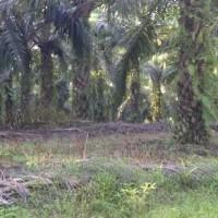 1 bidang tanah dengan total luas 20340 m<sup>2</sup> di Kabupaten Muaro Jambi