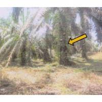 1 bidang tanah dengan total luas 20360 m<sup>2</sup> di Kabupaten Tebo