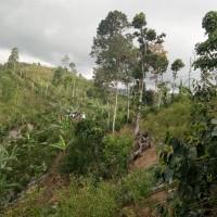 BRI Bangli (21-09): 1 (satu) bidang tanah SHM No. 636 luas 5600 m2 di Desa Selulung, Kec. Kintamani, Kab. Bangli