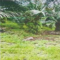 BNI PALEMBANG: 1 bidang tanah dengan total luas 9047 m2 di Kabupaten Seluma