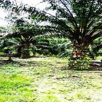 BNI PALEMBANG: 1 bidang tanah dengan total luas 14409 m2 di Kabupaten Seluma