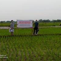 [BRI Brebes]tanah SHM no 1158 luas 1480 m2 di Desa Baros, Kec.Ketanggungan,Kabupaten Brebes