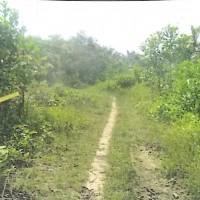 5 bidang tanah dengan total luas 1000 m<sup>2</sup> di Kabupaten Tanjung Jabung Barat