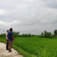 PT BNI:tanah pertanian SHM No. 243 luas tanah 2.552 m2 di Desa Sumberejo, Kec. Bonang, Kab. Demak