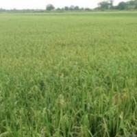 1 bidang tanah dengan total luas 10000 m<sup>2</sup> di Kabupaten Musi Banyuasin