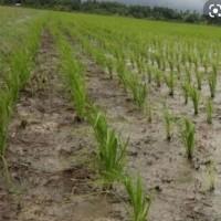 1 bidang tanah dengan total luas 6608 m<sup>2</sup> di Kabupaten Musi Banyuasin