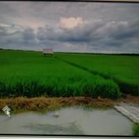 1 bidang tanah dengan total luas 10000 m<sup>2</sup> di Kabupaten Banyu Asin