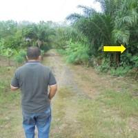 2 bidang tanah dengan total luas 1513 m<sup>2</sup> di Kota Prabumulih