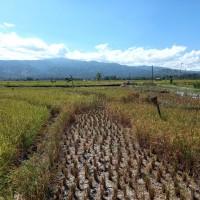1 bidang tanah dengan total luas 2068 m2 di Kabupaten Bantaeng