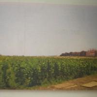 BRI Prob 2b) Sebidang Tanah SHM No. 116 Luas : 9.650 m2, terletak di Desa/Kel. Asembakor, Kec. Kraksaan, Kab. Probolinggo