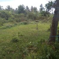 2 bidang tanah dengan total luas 5000 m2 di Kabupaten Kutai Kartanegara