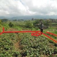 PNM Madiun Lot 6 b:1 bidang tanah SHM 886 dengan total luas 355 m2 di Kabupaten Magetan