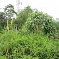 BRI SIJUNJUNG: 1 bidang tanah dengan total luas 422 m2 di Kabupaten Sijunjung