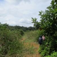 BRI SIJUNJUNG: 1 bidang tanah dengan total luas 623 m2 di Kabupaten Dharmasraya