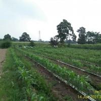 BPR Bhapertim Persada - 1 bidang tanah dengan total luas 2360 m2 di Kabupaten Kediri