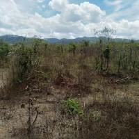 Mandiri RRCR, Lot 1b: 1 bidang tanah dengan total luas 19995 m2 di Kabupaten Sigi