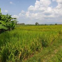 [BRIBrebes]tanah & bangunan SHM no 2286  luas 2122 m2 di Desa Luwunggede,Kec.Tanjung,Kabupaten Brebes