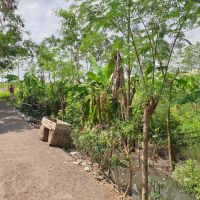 [BRIBrebes]tanah SHM no 2244  luas 3283 m2 di Desa Luwunggede, Kec.Tanjung,Kabupaten Brebes