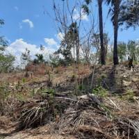 Sitaan Pajak KPP Kupang - 1 bidang tanah dengan total luas 2048 m2 di Kabupaten Kupang